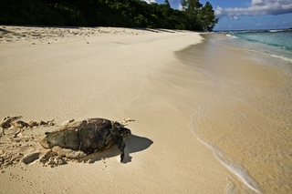 Turtle Tracking using telemetry is now accessible to the youth in Seychelles